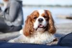 2014.9.2 lemmikkikuvaus miljöökuvaus harrastuskuvaus koirakuvaus eläinkuvaus-1