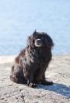 2014.9.2 lemmikkikuvaus miljöökuvaus harrastuskuvaus koirakuvaus eläinkuvaus-2