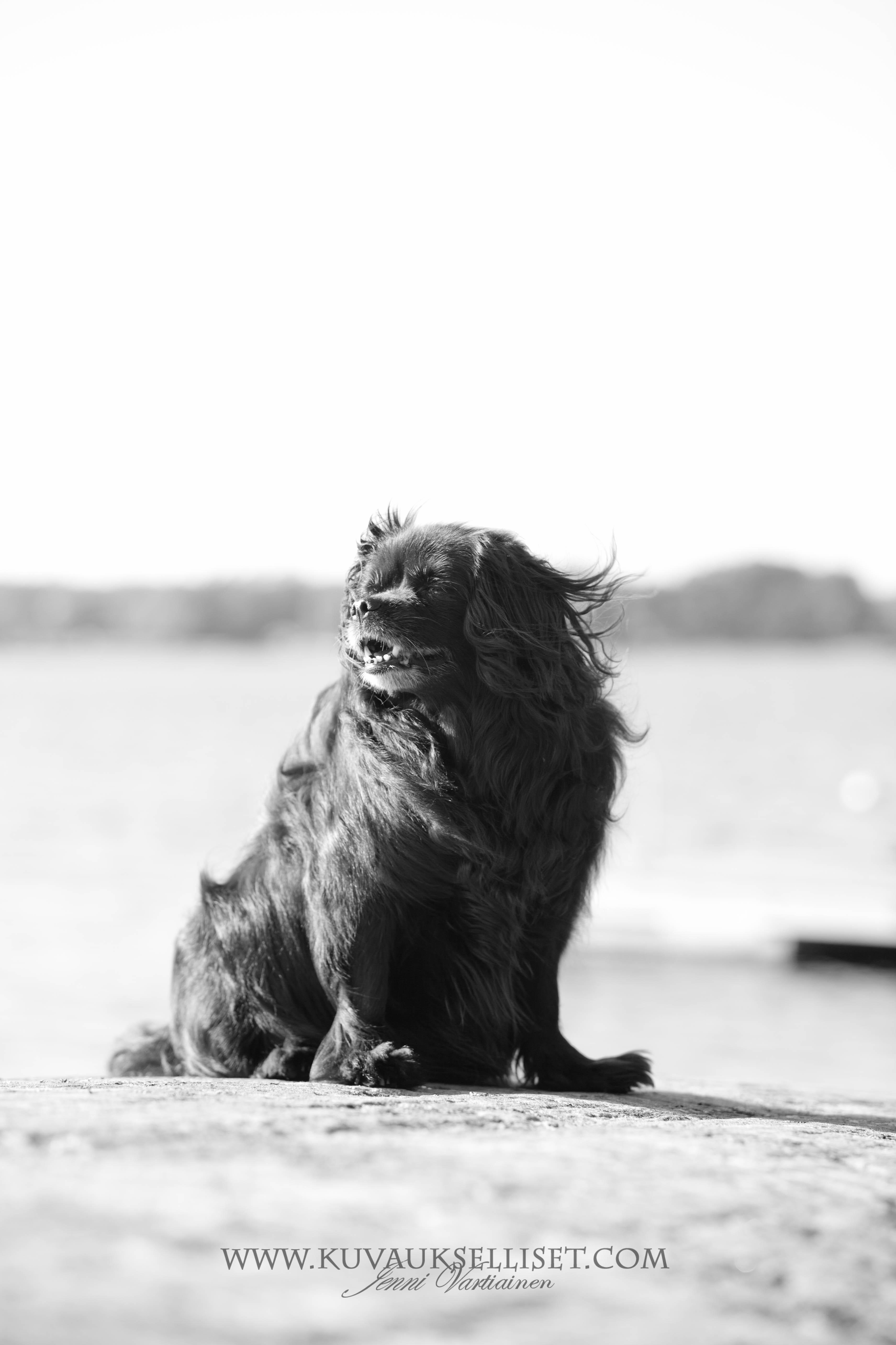 2014.9.2 lemmikkikuvaus miljöökuvaus harrastuskuvaus koirakuvaus eläinkuvaus-4