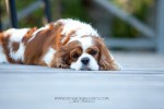 2014.9.2 lemmikkikuvaus miljöökuvaus harrastuskuvaus koirakuvaus eläinkuvaus-6